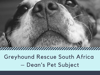 Greyhound Rescue South Africa – Dean's Pet Subject - Retire Successfully