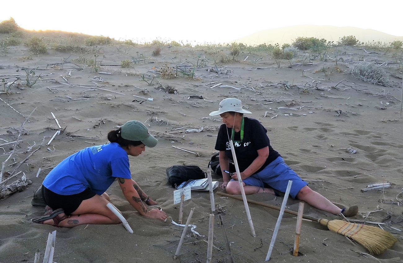 Female volunteers on beach excavating